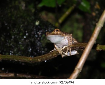 Tree frog on the tree in night in Madagascar