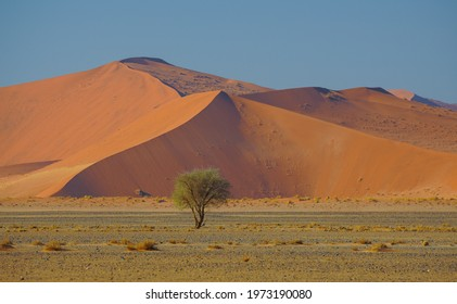 Tree in front of Sand Dunes in Namib-Naukluft National Park, Sesriem, Namibia