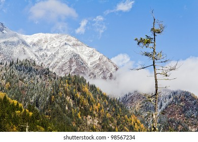 A tree in front of snow-covered peaks