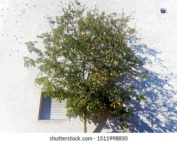 """A tree in front of war scars. The building is part of ex """"OSLOBODJENJE"""" complex, todays """"RADON PLAZA HOTEL"""". The complex was targeted by Bosnian Serbs who demolished it by shelling."""