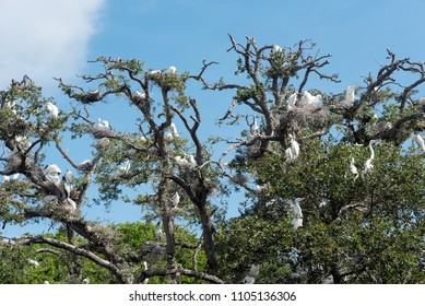 Tree full of White Egrets and Storks in a rookery/aviary