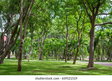 a lot of tree at the garden and lawn