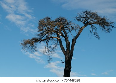 The tree. The giant