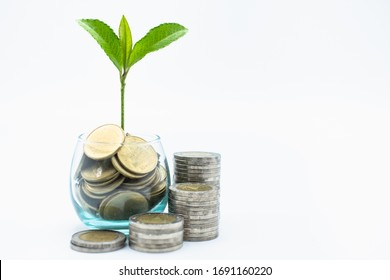 Tree in a glass jar and a ladder of coins, white background For financial and banking concepts Saving and investing for home buying, concept of saving money.