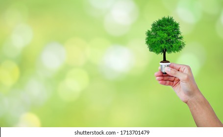 A tree glowing in a light bulb on green natural bokeh background. green energy for environment and save the earth ecology concept.