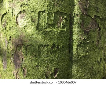 Tree grafitti, Rydal Water and Grasmere, Lake District, Cumbria, England