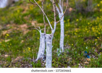 tree graft background