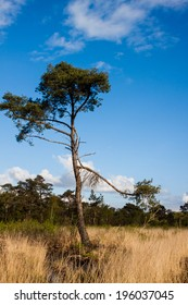 tree in grass
