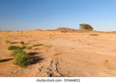 Tree and grass in the Desert, Ouzina, Morocco