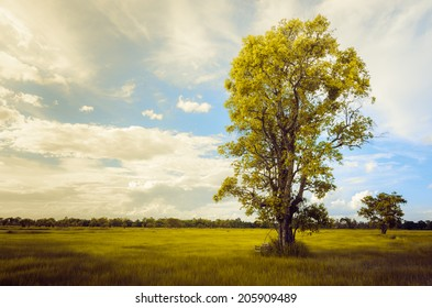 Tree grass field and sky in countryside Thailand vintage