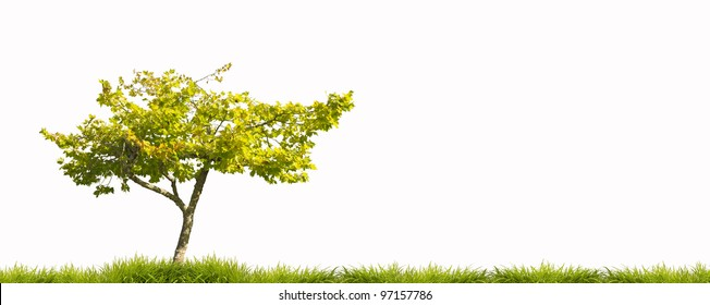 Tree and grass on white background