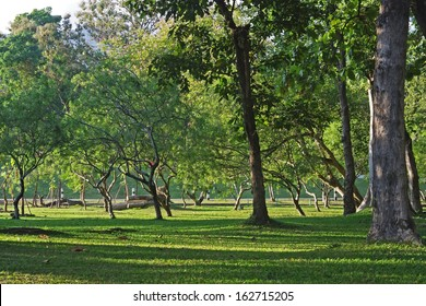 tree and grass with sun light scene in the garden of Chiang Mai University, Thailand