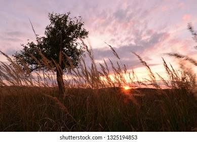 Tree with grass in sunset sun lighjt.
