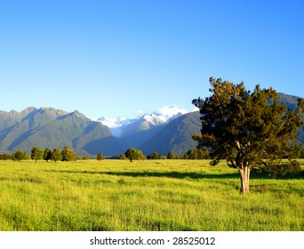 Tree in Grassy Field in front of Mount Cook and Mount Tasman, New Zealand