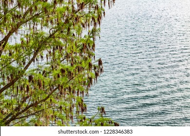 A tree with green and brown leaves over water