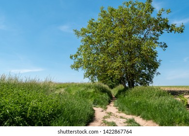 Tree in a green field with blue sky at Auvers-sur-Oise, France