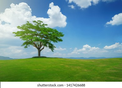 Tree in green field under beautiful sky