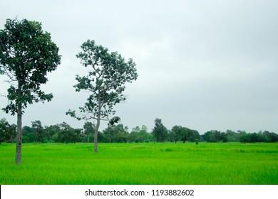 tree green flower - Shutterstock ID 1193882602