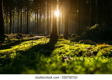 Tree in the green forest lit by warm sun light, blurred foreground