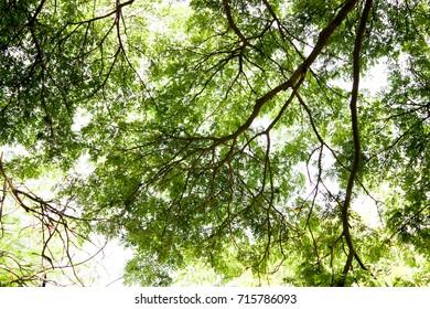 Tree   green  leaf