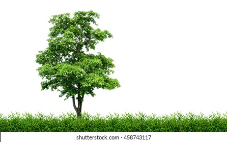 Tree in green meadow isolated on white background.