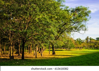 Tree with green meadow while sunset in public park, Garden environment