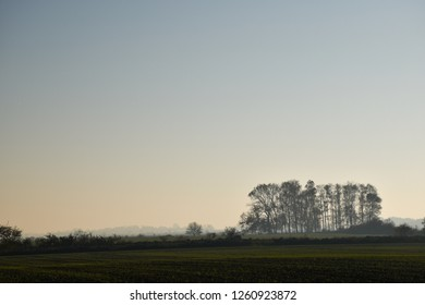 Tree grove in a foggy landscape with green fields at the swedish island Oland