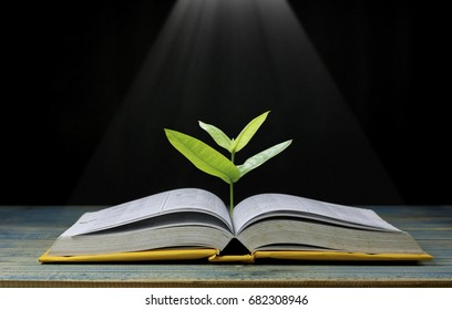 tree grow up from book with light shining as getting knowledge on black background, concept as opening paper will see knowledge of the world, learning by yourself and improve your life everywhere