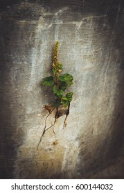 tree grow from concrete