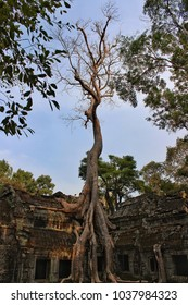 Tree growing around the ancient temple of Ta Prohm. Ta Prohm is the modern name of the temple at Angkor, Siem Reap Province, Cambodia, built in the Bayon style.