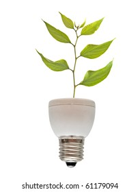 Tree growing from base of fluorescent lamp