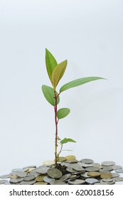 Tree growing in coins with white background