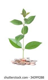 Tree growing in fertile coin soil
