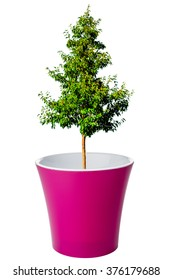 Tree growing from flower pot