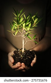 Tree growing in hands