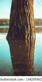 a tree growing from a lake, with a reflection on the water