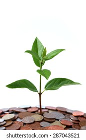 A Tree Growing from Money