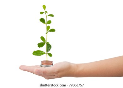 Tree growing in money on hand isolated on the white background