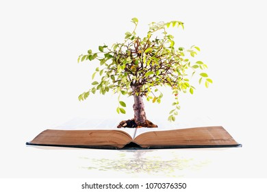 Tree growing on a book, isolated over white, horizontal image