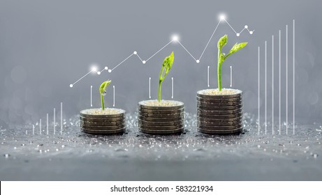 Tree growing on coins, Business save and growing finance, piles of coins, csr, trees growing on stack of coins, saving money, green graph, Concept of money