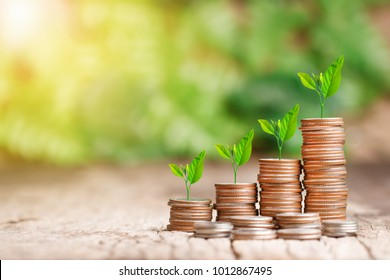 Tree growing on coins stack with sun ray for saving money concept