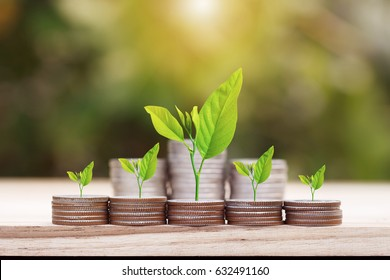 Tree growing on coins stack with sunray for saving money concept