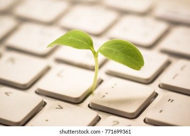 Tree growing on a computer keyboard / Green IT and Computing