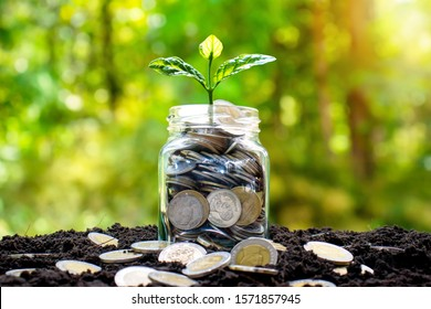 The tree is growing on a jar of money and many coins that are laid on the ground.