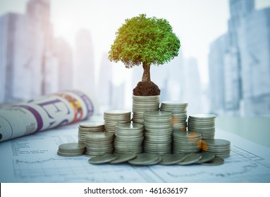 The tree are growing on money and financial report, business newspaper on desk of investor. Concept of investment property growth.