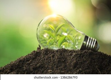 The tree growing on the soil in a light bulb. Creative ideas of earth day or save energy and environment concept