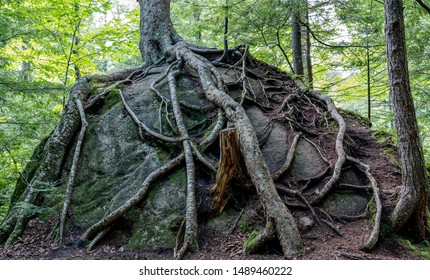 Tree growing on top of Rock in Adirondacks