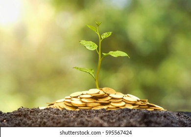 A tree growing from pile of coins / CSR and green business / business ethics