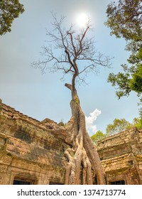 Tree growing in ruins of Ta Prohm or Jungle Temple in Angkor Complex of Cambodia.
