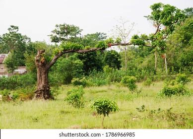 a tree growing sideways , unique style , sideway gravity